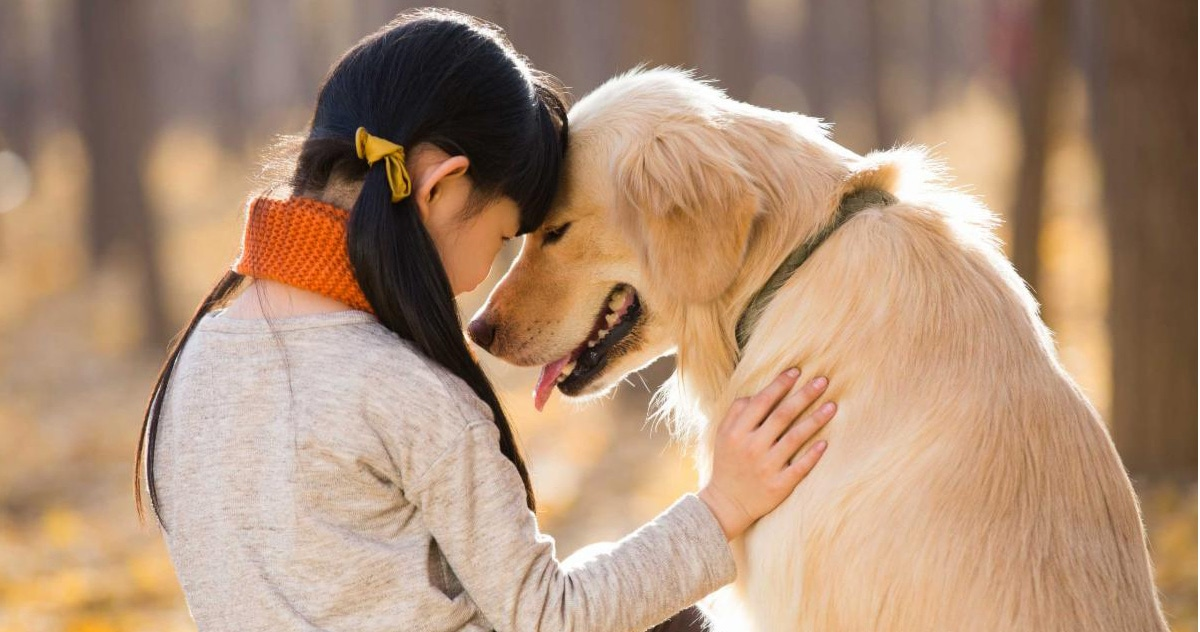 young girl leaning her head against a golden lab's forehead